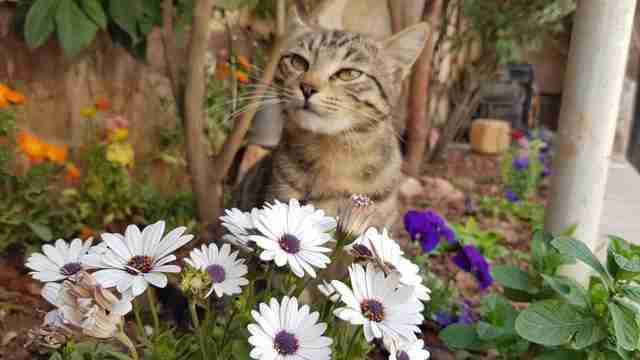 Cat enjoying a flower garden