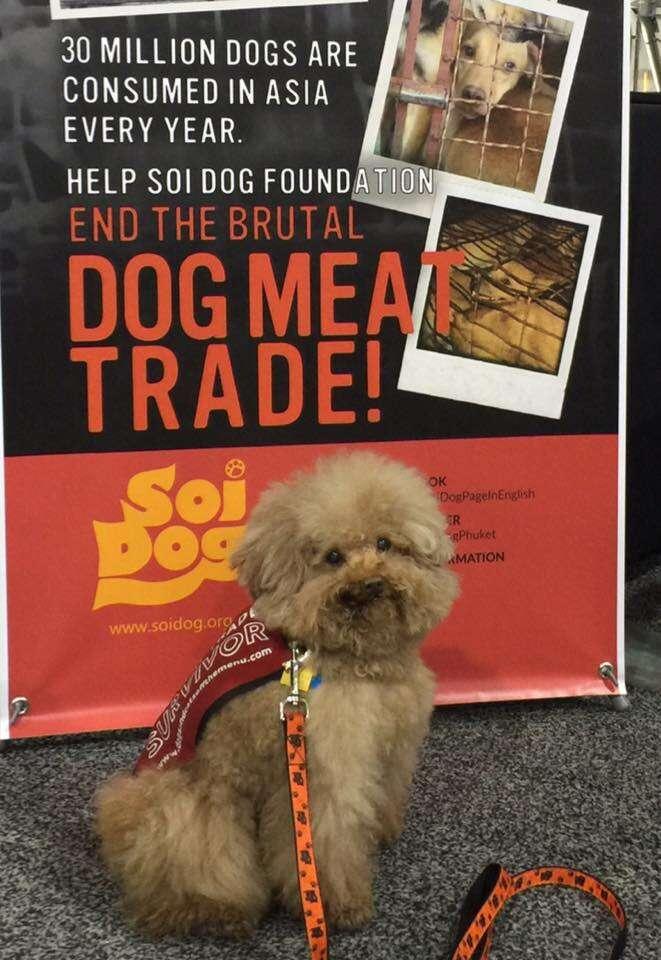 dog meat trade rescue korea