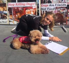 dog meat trade survivor willow poodle