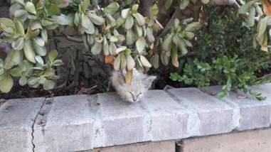 tiny sick kitten found in bushes