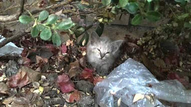 tiny sick kitten found in bushes