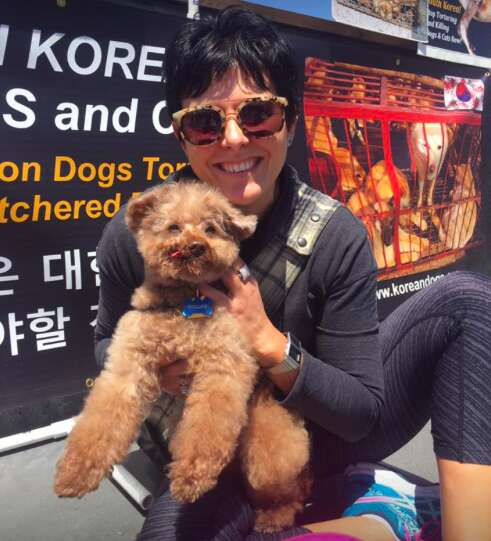 rescue poodle dog meat trade