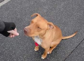 drugged dog philadelphia