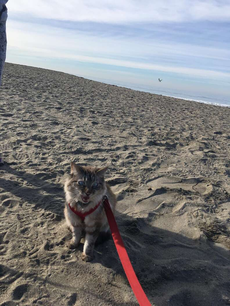 cat loves going to the beach