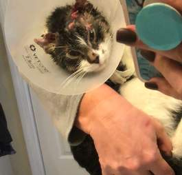 cat rescued from snowy streets