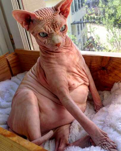 naked cat xherdan switzerland