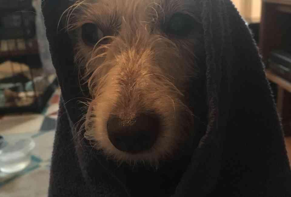 Dog Baths: Why Your Dog Hates Getting Clean - The Dodo