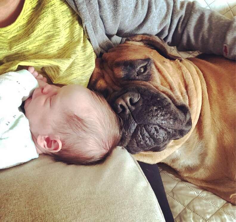 Newborn baby with bull mastiff
