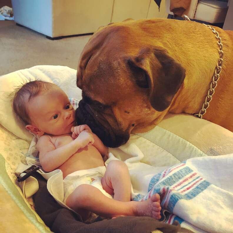 Bull mastiff watching over baby