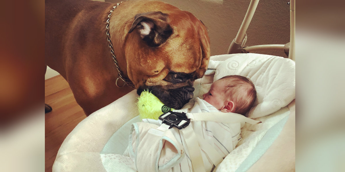 Image result for Dog always offers his favorite toy whenever he hears his new baby crying