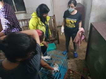 Rescuers moving the cats out of the apartment