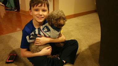 rescue poodle iowa adopted