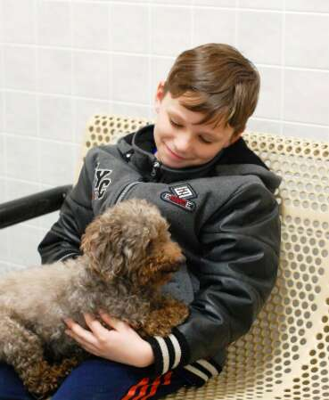 senior rescue poodle iowa adopted