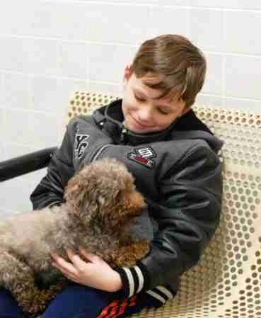 senior rescue poodle iowa adopted