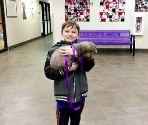 rescue poodle senior adoption
