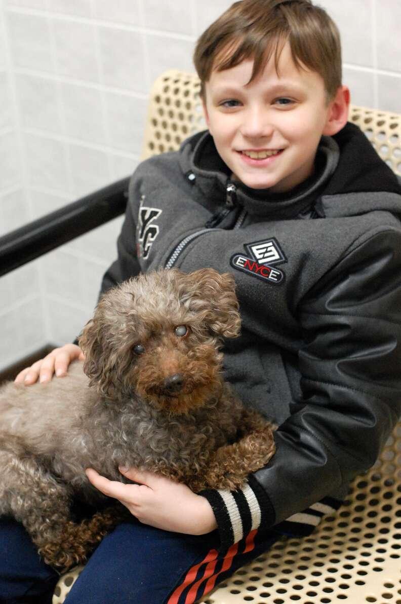 senior rescue poodle iowa adoption