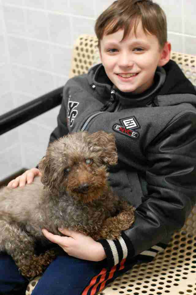 senior rescue poodle iowa adoption