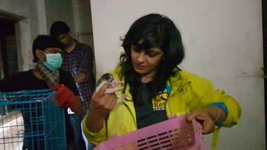 Woman loading kitten into carrier