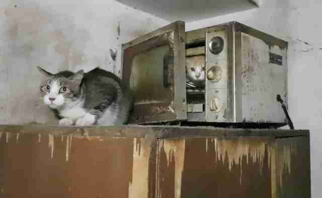 Cats hiding in microwave