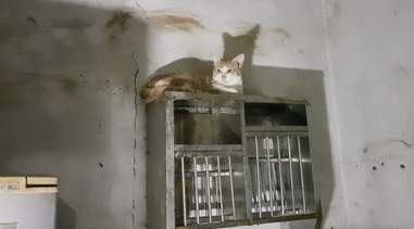 Cat sitting on top of shelf
