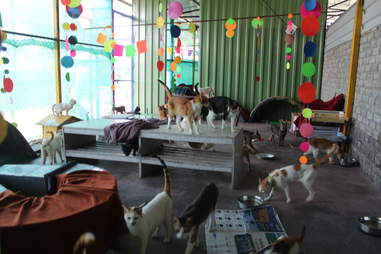 Cats inside a cattery