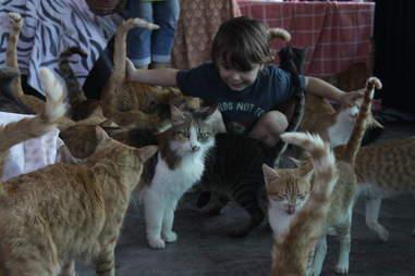 Little boy petting cats