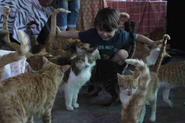 Little boy petting cats