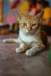 Closeup of orange kitty