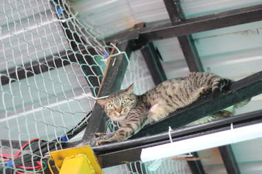 Cat hiding on top of platform