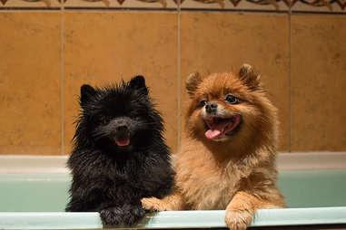 puppies in the bath tub