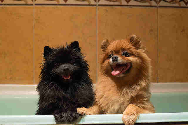 puppies in the bath tub