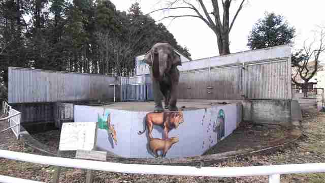 lonely elephant japan