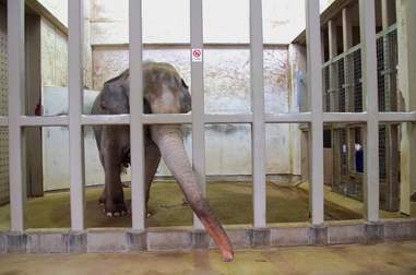 lonely zoo elephant japan sunny