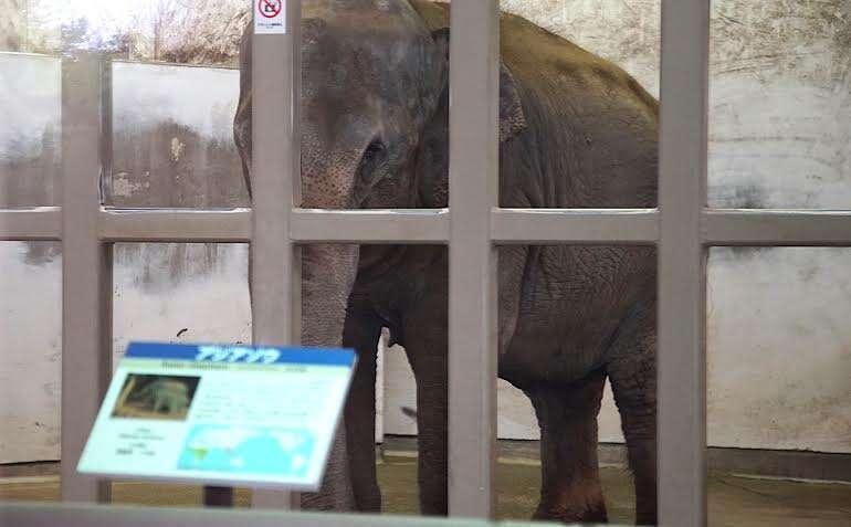 lonely elephant japan