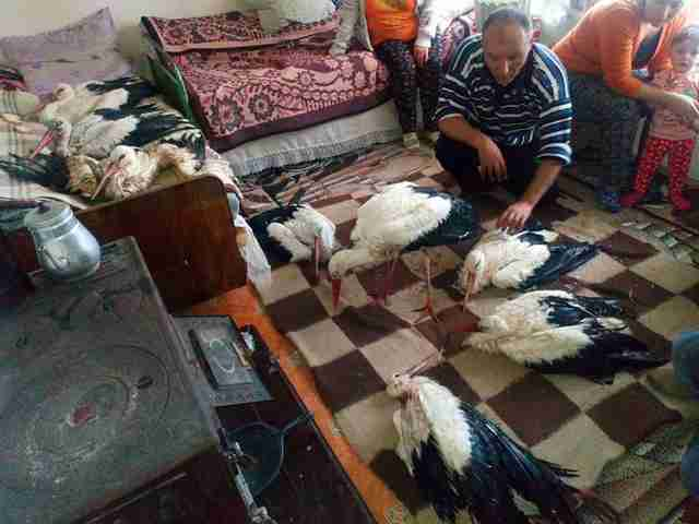 Man opening up his home to wild storks