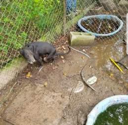 dog abandoned muddy field louisiana