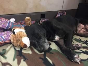 dog abandoned louisiana
