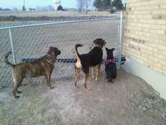 dog abandoned louisiana adopted