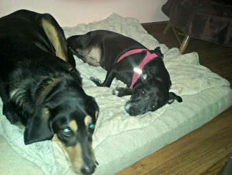 rescue dog louisiana bayou andi