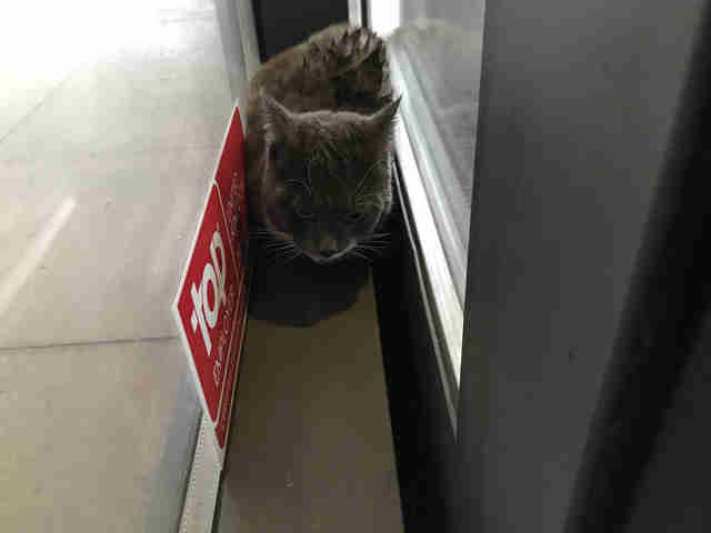cat stuck in automatic doors