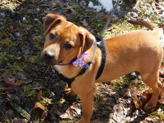 miranda skinny dog pennsylvania adopted