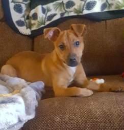 starving puppy miranda pennsylvania