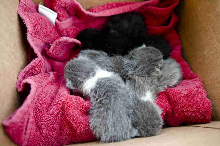 feral kitten litter in cardboard box