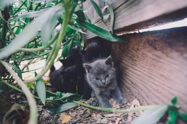 kitten litter in backyard