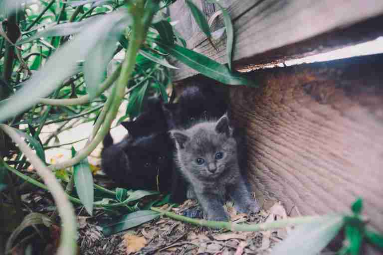 kitten litter in backyard