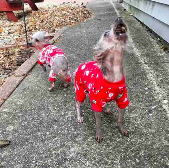 puppy mill rescue dogs