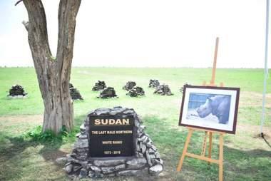 Memorial for Sudan, the last male northern white rhino, in Kenya