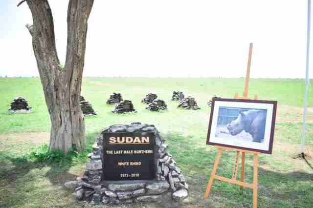 Memorial for Sudan, the last male northern white rhino, in Kenya