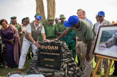 People remember Sudan, the last male northern white rhino, in Kenya