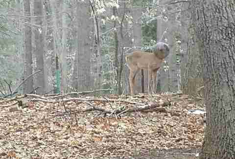 Guy Spots A Deer In His Backyard — Who Looks A Little Different